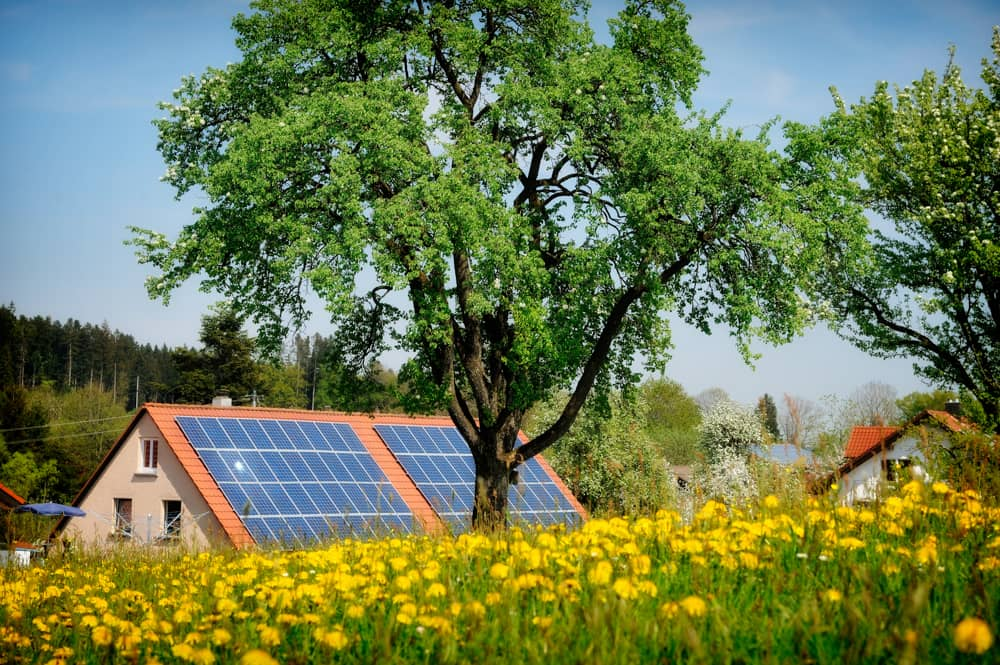 A photo of a house with residential solar array, yellow flowers in the foreground and a large tree